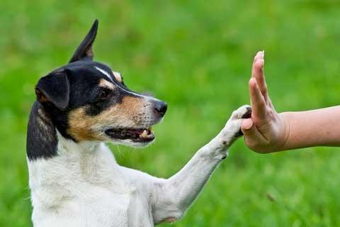 Experto en Adiestramiento de Base y Educación Canina