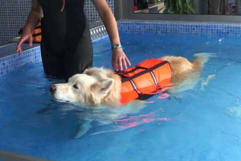 Experto en Asistente Técnico en Rehabilitación y Fisioterapia Canina y Felina