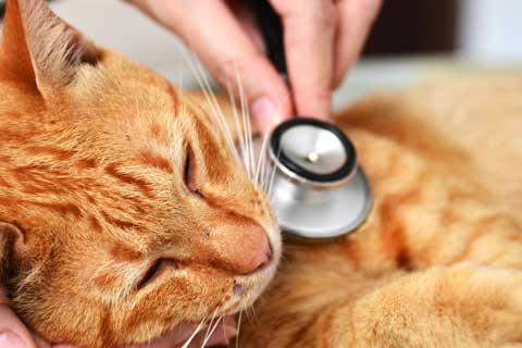 Experto en Enfermería Veterinaria General, Ecuestre y Exóticos