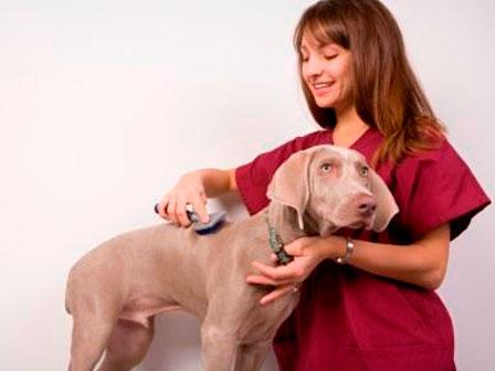 Diplomado en Peluquería Canina