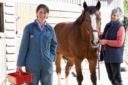Diplomado en Asistente Técnico Veterinario Ecuestre y Cuidador de Caballos